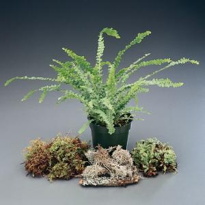 Non-Flowering Plant Set