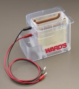 Ward's® Vertical Dual Electrophoresis Tank
