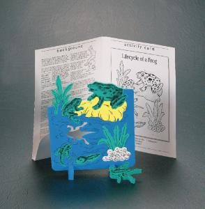 Butterfly Life Cycle Model and Book