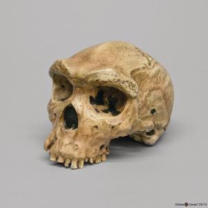 <i>H. heidelbergensis</i> (Broken Hill 1)