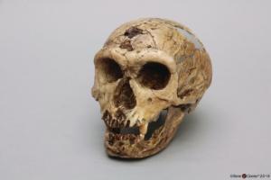 <i>H. neanderthalensis</i> (La Chapelle-aux-Saints)