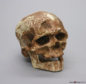 Cro-Magnon with Jaw