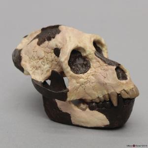 <i>Aegyptopithecus zeuxis</i>