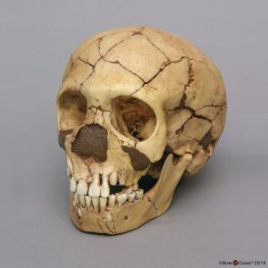 <i>H. neanderthalensis</i> (Teshik-Tash) (Child)