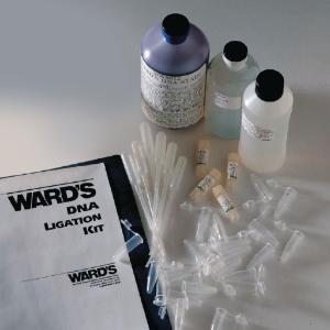 Ward's® DNA Ligation Lab Activity