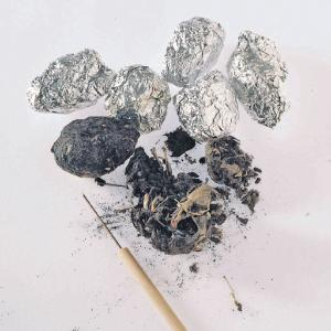 Ward's® Introduction to Owl Pellets Lab Activity
