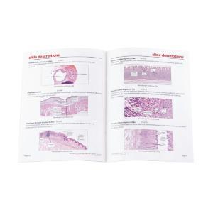 Digestive System Slide Set
