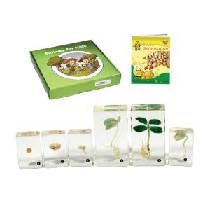 Realbug Kids Bean Germination