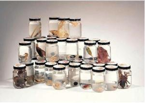 Animal Kingdom Sets: Acoelomates and General Specimens 3