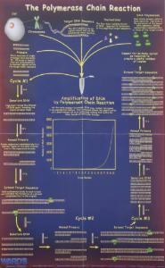 Ward's® PCR Process Poster