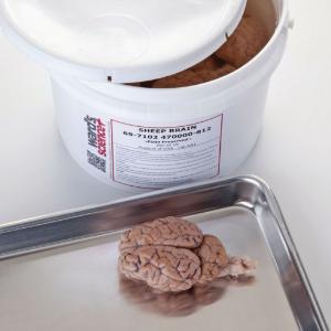 Comparative brain collection