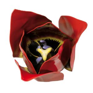 Tulip Flower Model