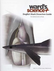 Shark Visual Dissection Guide