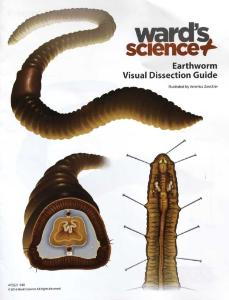 Earthworm Visual Dissection Guide