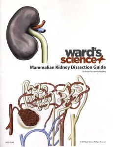 Kidney Visual Dissection Guide