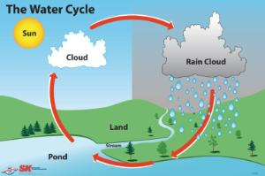 Elementary Water Cycle Poster