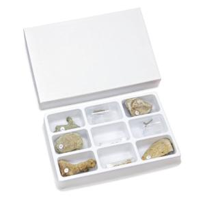 Bryozoa-Sea Mats Collection Set