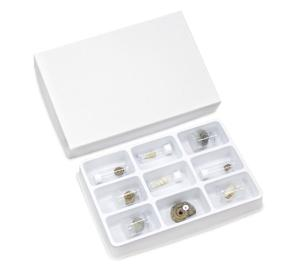 Gastropoda-Snails Collection Set