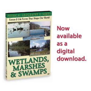 Physical Geography II: Wetlands, Marshes & Swamps
