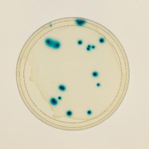 Ward's® Transduction of E. coli Lab Activity