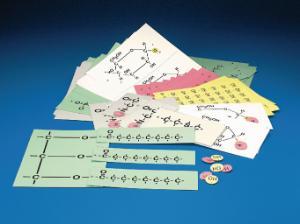 Biochemistry Manipulative