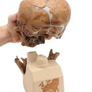 Replica Homo Neandert