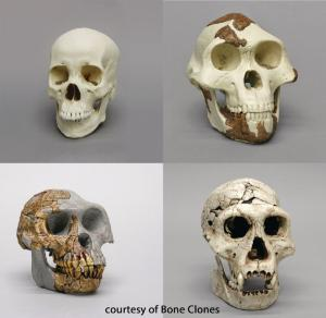 BoneClones® How We Got Here Skull Sets
