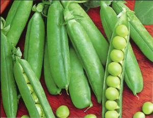 Alaska Green ( Smooth) Seeds