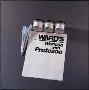 Ward's® Preying Protist Study Set