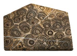 Algal Stromatolite (Cynobacteria) (PreCambrian)