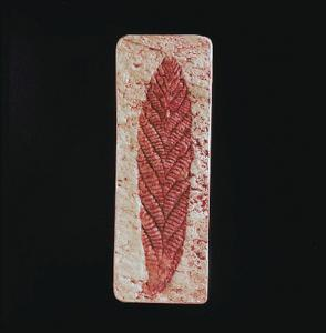<i>Charnia masoni</i> (Precambrian)