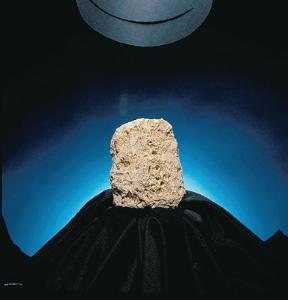 Ward's® Limestone (Shell)