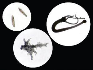 Vital-stained Live Specimen Sets