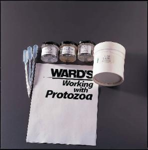 Ward's® Protozoa Classification Set