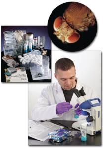 Ward's® Genetics of <i>Drosophila</i> Lab Activity