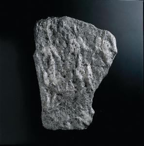 <i>Nothosaurus</i> sp. (Triassic)