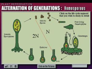 Plant Biology Tutor CD-ROM