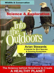 Video habitat for bird species