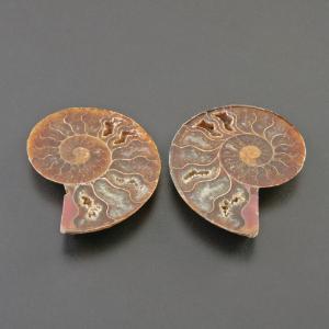 <i>Ammonites</i> (Jurassic)