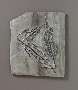 <i>Keichousaurus hui </i>(Triassic)
