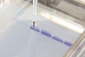 Ward's® AP Biology Investigation 9: Genetics and Information Transfer: Restriction Enzymes