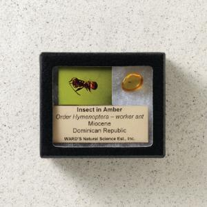 Insects in Amber (Miocene)