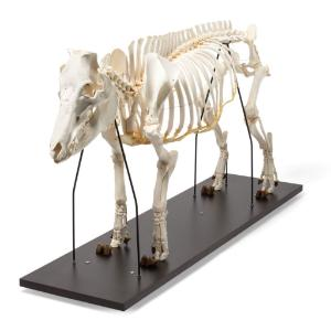 Pig Skeleton M Articulated