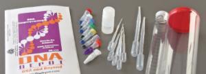 DNA Fingerprinting Lab Activity