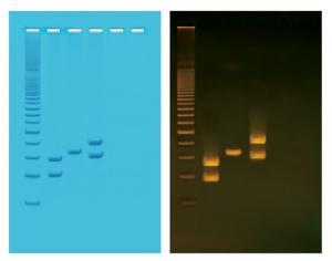 Human PCR Tool Box Lab Activity