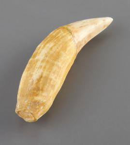 Ursus spelaeus (Holocene)