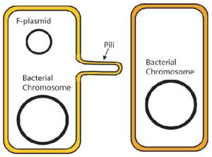Bacterial Conjugation Activity Kit