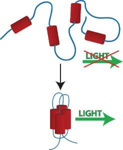 Protein Folding Study Activity Kit