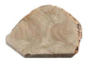 Condonophycus austini (Mississippian) Fossil Specimen