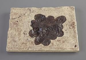 <i>Ivesheadia</i> sp. (Precambrian)